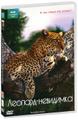 BBC: Леопард-невидимка